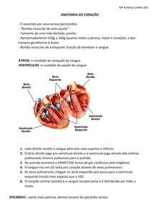Sist Circulatório- coração