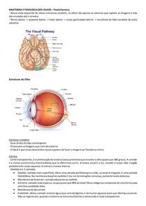Anatomia e Fisiologia dos Olhos