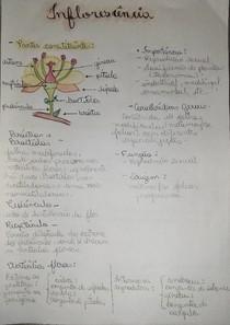organografia flor
