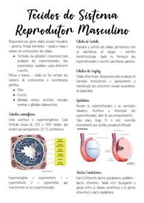 Tecidos do Sistema Reprodutor Masculino e Feminino