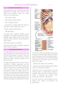 Anatomia da Cavidade Abdominal