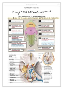 Resumão dos pares cranianos
