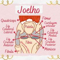 Anatomia do Joelho - Vista Anterior - @biaresumosdafisio