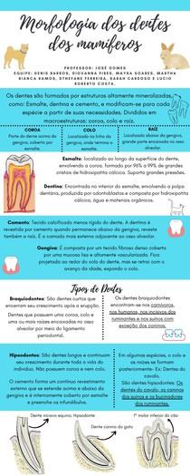 Morfologia dos dentes dos mamíferos