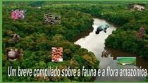 PORTFÓLIO - FAUNA E FLORA DA AMAZÔNIA