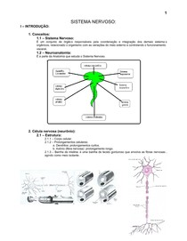 6.sistema_nervoso