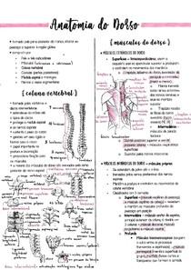 Anatomia do Dorso