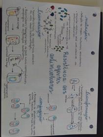 Farmacologia Veterinária - Mapa mental