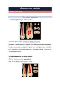 Anatomia dentes posteriores