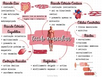 Tecido Muscular - MAPA MENTAL BÁSICO