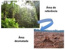 Aula 5 - Bases ecológicas RAD(1)