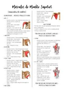 Músculos do Membro Superior