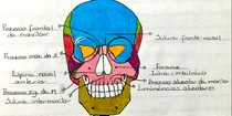 OSSO DOS CRÂNIO (Visão frontal)