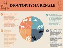 Dioctophyma renale: O parasita gigante do rim