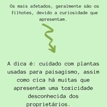 Planta Tóxica - Cyca