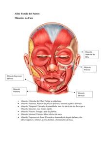 Músculos da Face