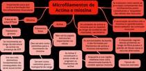 Microfilamentos de Actina e miosina