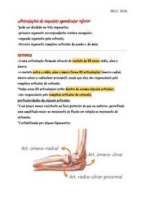 Articulações do esqueleto apendicular inferior