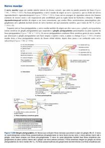 Gânglio pterigopalatino - Nervo maxilar