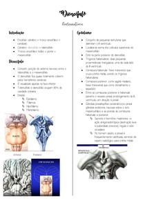 Diencéfalo - Neuroanatomia
