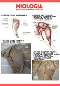 Miologia - músculos dos membros pélvicos   CA I MACRO