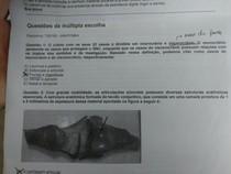 anatomia Unip