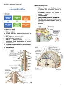 Meninges Encefálicas - Neuroanatomia