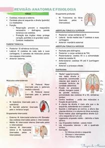 Revisão anatomia do tórax
