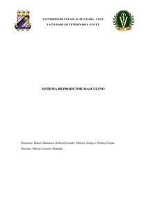 Sistema reprodutor masculino - Relatório