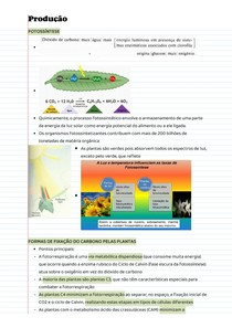 Anotações de aula - Produção