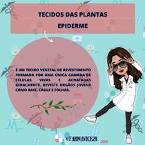 TECIDO VEGETAL- EPIDERME