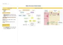 Divisão Fisiológica do Sistema Nervoso
