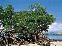 Aula Mangue