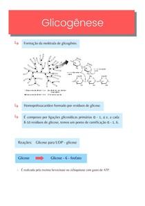 Resumo: formação do glicogênio (glicogênese) - Bioquímica