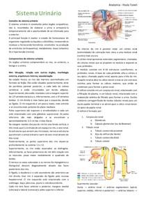 Resumo_Sistema Urinário