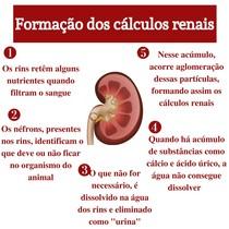 Formação de cálculos renais