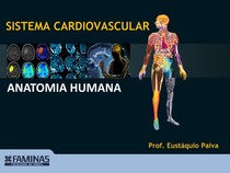 Anatomia   Sistema Cardiovascular I (1)