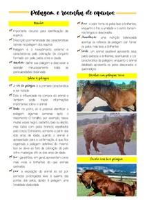 Pelagem e resenha de equinos
