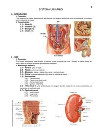 12.sistema_urinario