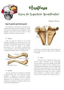 Ossos do esqueleto apendicular superior e inferior