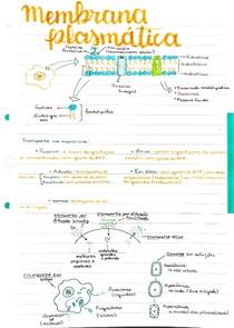 Membrana plasmática