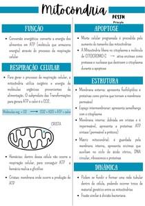 Resumo mitocôndria