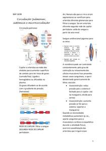 Circulação pulmonar, sistêmica e microcirculação