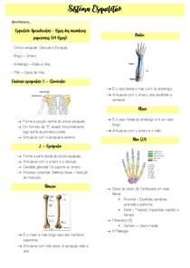 Resumo digitado - parte 2 - Sistema esqueletico