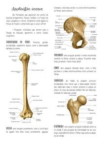 Acidentes ósseos