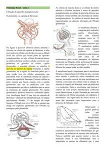 Fisiologia Renal II