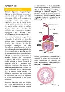 Anatomia (07) Sistema Digestório