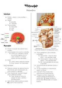 Mesencéfalo - Neuroanatomia