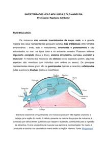 INVERTEBRADOS - FILO MOLLUSCA E FILO ANNELIDA