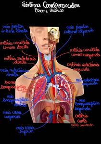 Sistema Cardiovascular Veias e Artérias